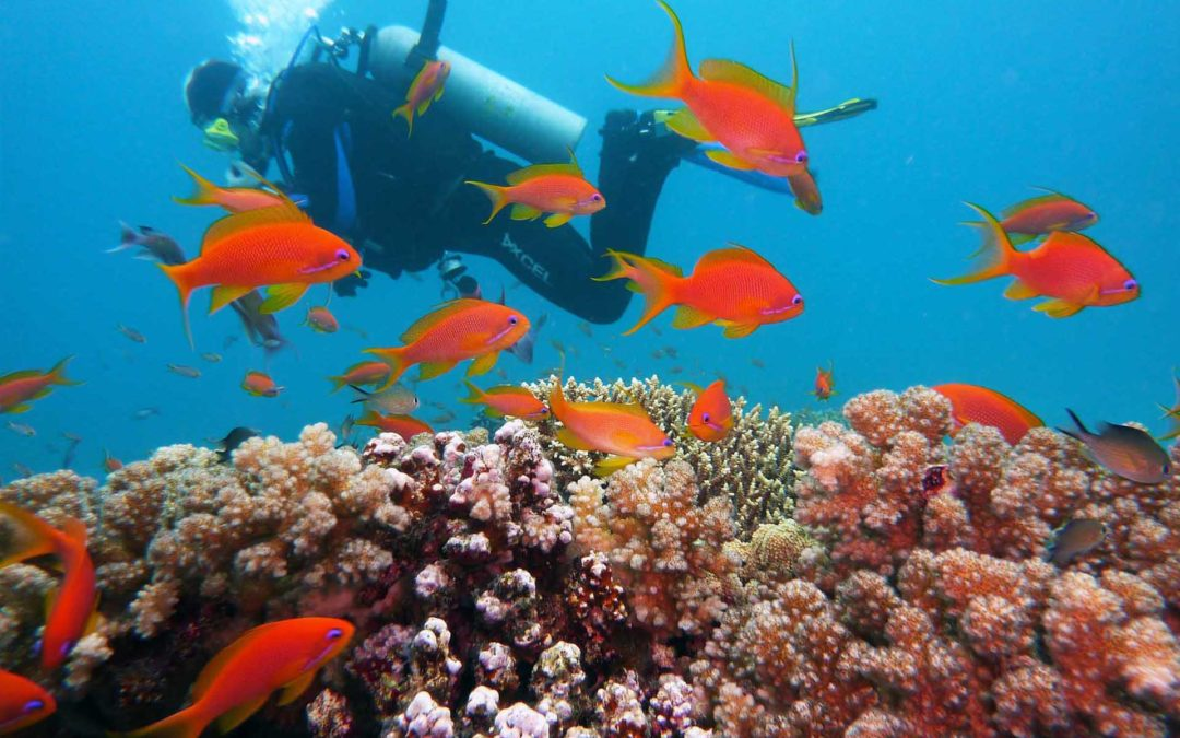 Things To Do in Puerto Vallarta: Underwater Adventures